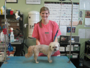 """Rhylee"" with Shelter Dog After Groom"